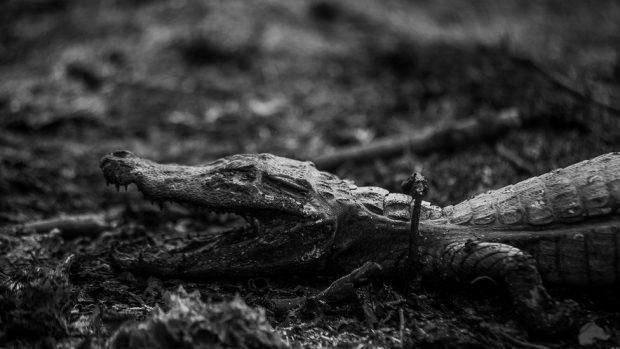 Pantanal: 7 impactantes imágenes de los incendios en el humedal más grande de Sudamérica